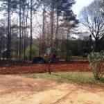 SCS Tree Service tree removal and grading