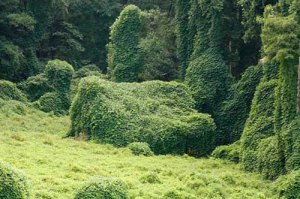 atlanta kudzu removal experts image