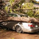 emergency tree removal in kennesaw tree on car