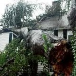 performing an emergency tree removal in marietta tree on house