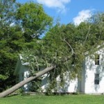 tree insurance claim tree fell on house