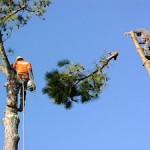 emergency tree removal marietta ga image