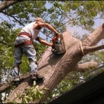 best tree services kennesaw ga