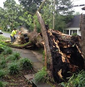 best-tree-removal-company-in-acworth-ga