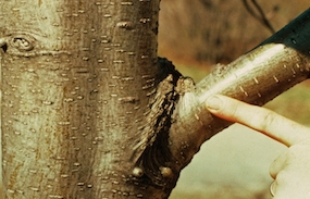 Tree Service Wodostock GA company