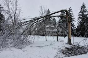 Ice damaged tree