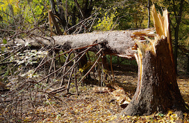 Damage from Tree before tree removal