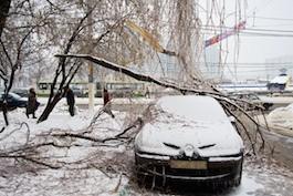 frozen tree on car