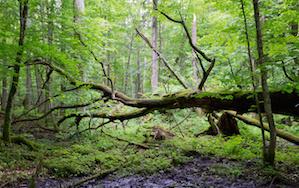 Marietta-Tree-Removal