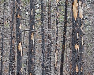 dead tree removal Marietta, GA