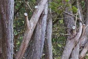 Marietta Tree Service removes dead trees