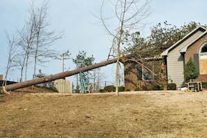 Tree Removal in Marietta, GA