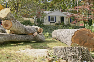 Tree Service in Woodstock, GA