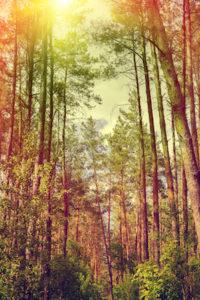 Woodstock Professional Tree Service