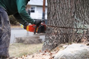 When to Call a Professional Tree Service Provider from Marietta, GA