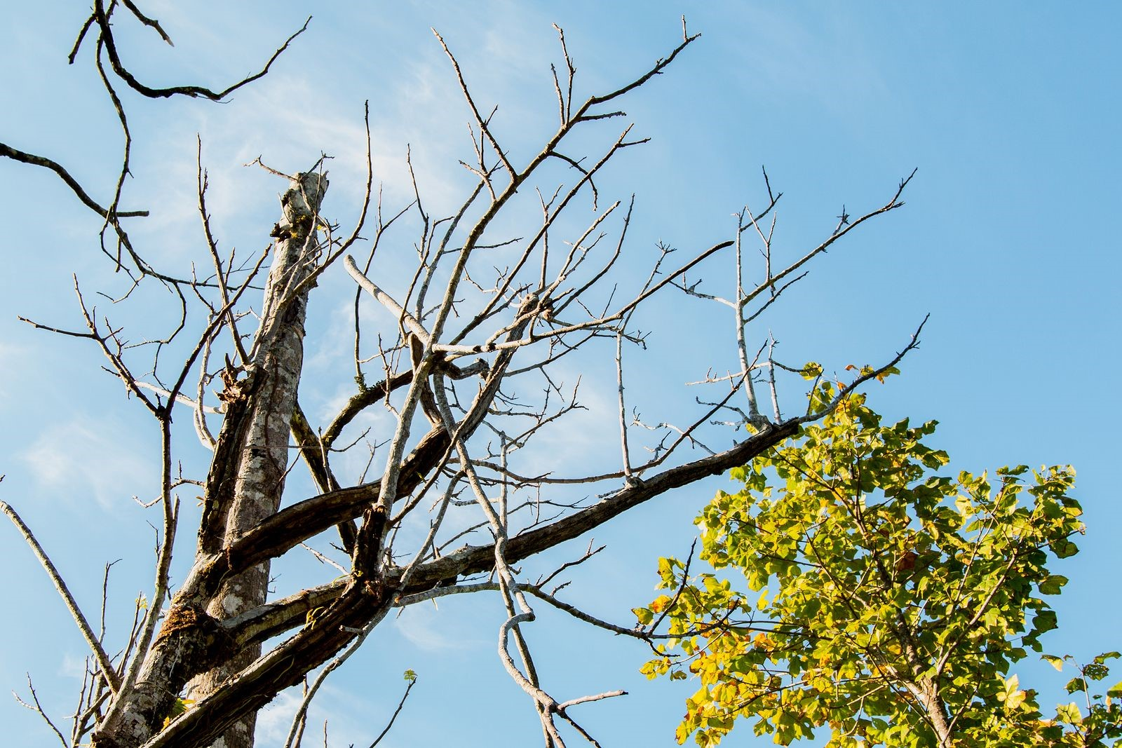 Distinct Signs that You Should Call a Tree Removal Service for Help