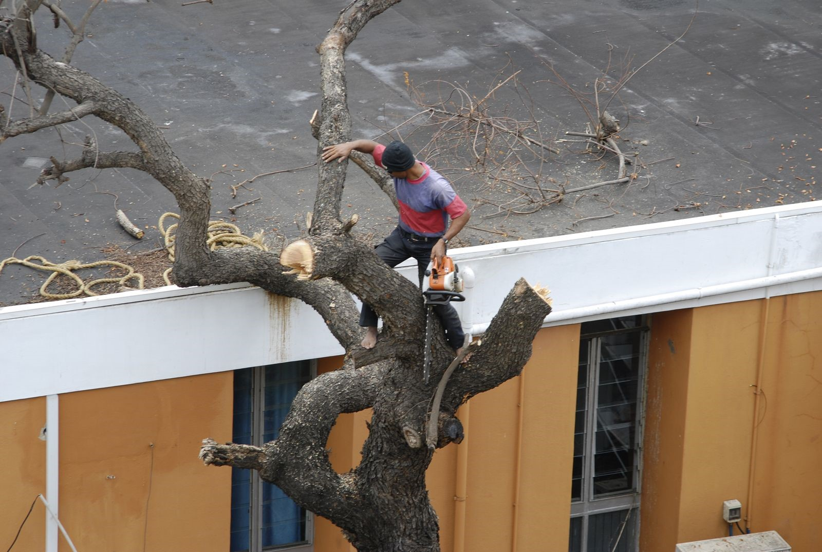 Trees Too Close to Home May Cause Damage, Says Tree Service Company