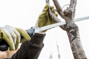 Keeping Trees Healthy Means Calling for These Types of Tree Service