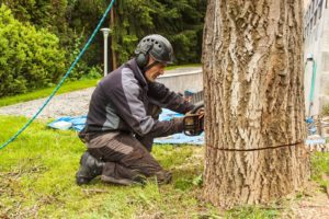 These Are Reasons Why Your Home May Need Urgent Tree Removal Service